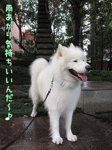 日曜涼しい朝散歩♪_c0062832_514458.jpg