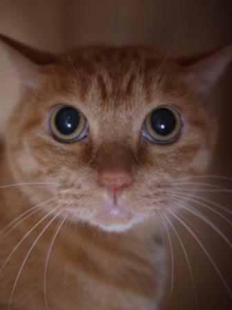 猫のお友だち チャッピーくん編。_a0143140_21323413.jpg