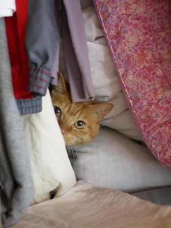 猫のお友だち チャッピーくん編。_a0143140_21335370.jpg