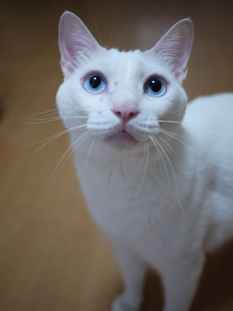 猫のお友だち vieくん編。_a0143140_21573220.jpg