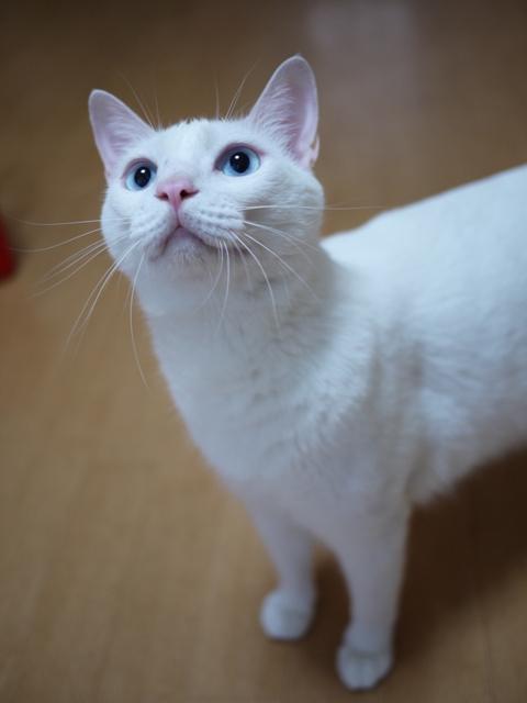 猫のお友だち vieくん編。_a0143140_2158326.jpg