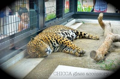 京都市動物園レポート _b0213347_2583561.jpg