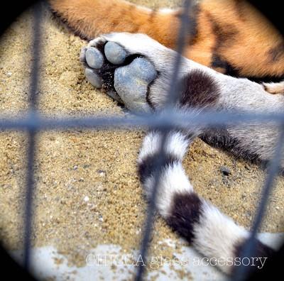 京都市動物園レポート _b0213347_3125140.jpg