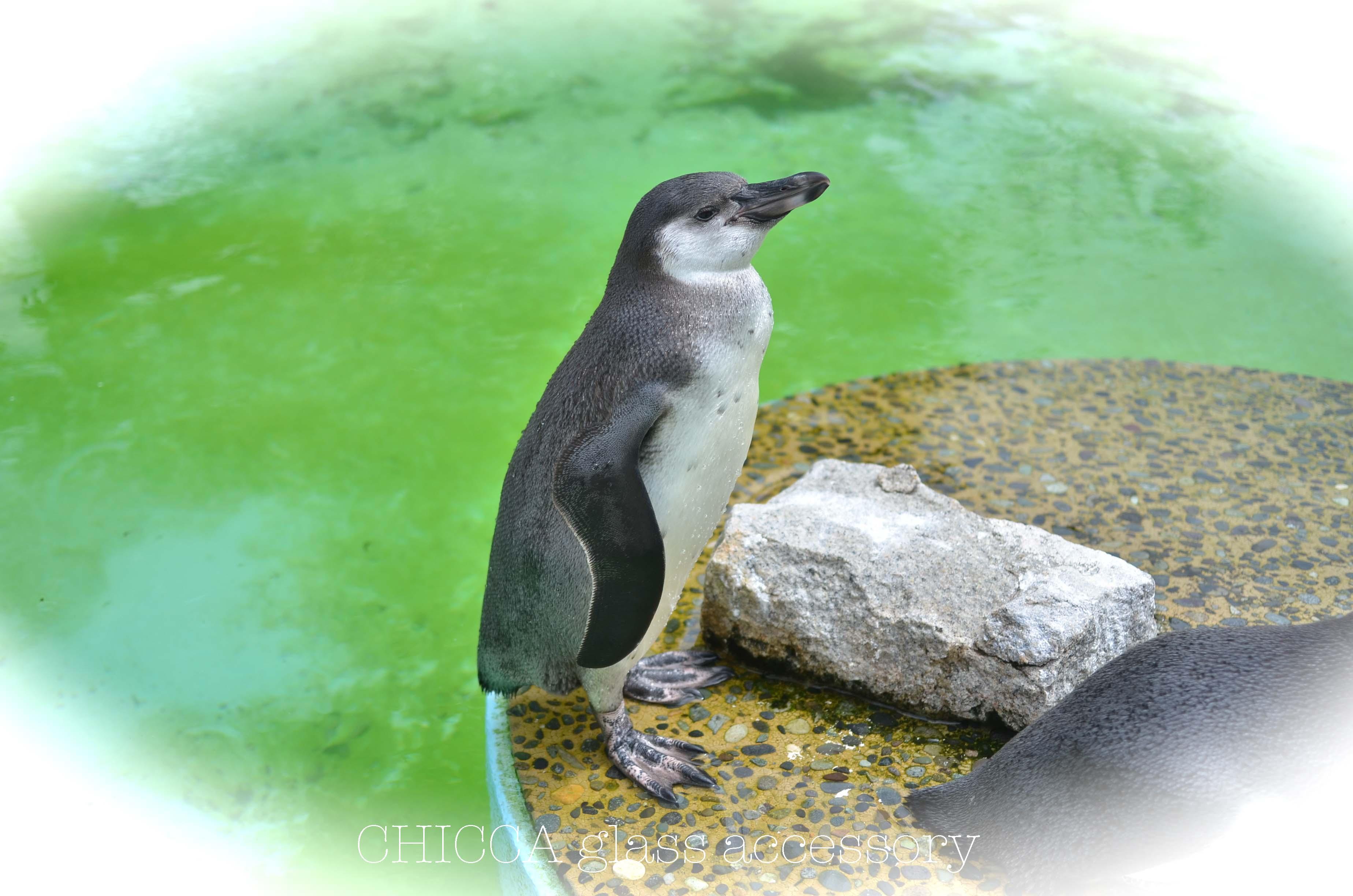 京都市動物園レポート _b0213347_3134515.jpg