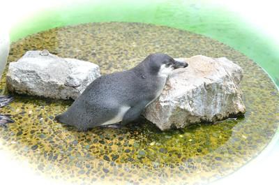 京都市動物園レポート _b0213347_3134785.jpg