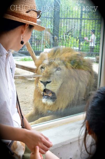 京都市動物園レポート _b0213347_3308.jpg