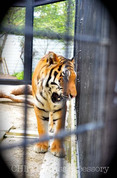 京都市動物園レポート _b0213347_35667.jpg
