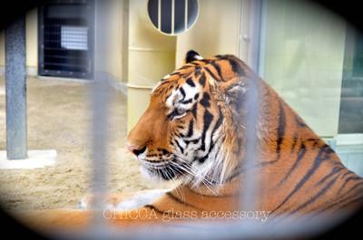 京都市動物園レポート _b0213347_374023.jpg