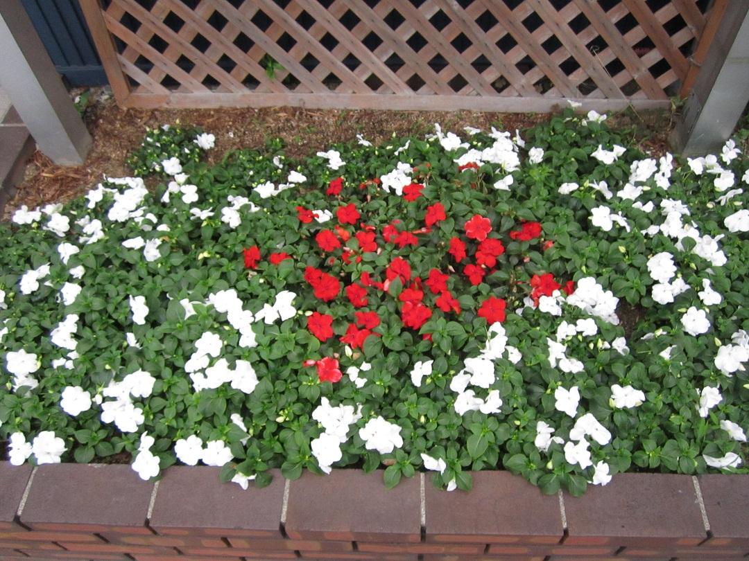 今日の日の丸花壇_f0205367_2051980.jpg