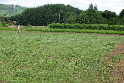 小麦2013の肥料撒き_c0110869_2051112.jpg
