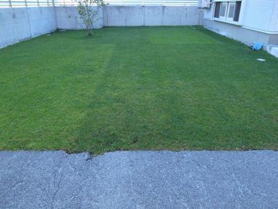 今日の芝生_e0246271_759733.jpg