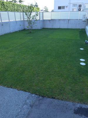 今日の芝生_e0246271_759736.jpg