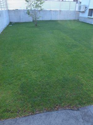 今日の芝生_e0246271_75984.jpg