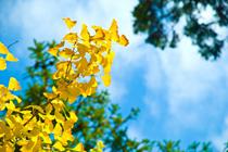 聖心館葉山道場空手通信 【 2012年 9月号】_e0198590_1173137.jpg