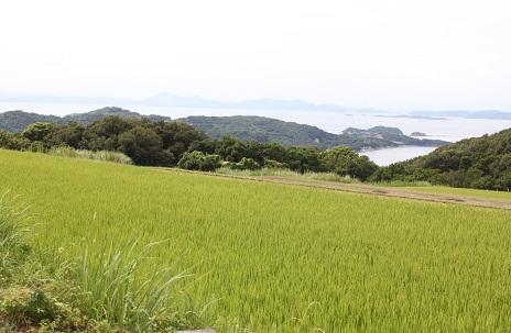 小豆島 「なかよし屋」農園見学☆_a0154793_17121838.jpg
