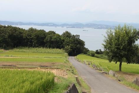 小豆島 「なかよし屋」農園見学☆_a0154793_1713510.jpg