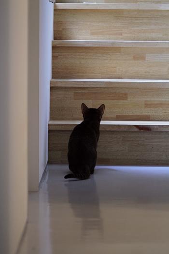 [猫的]血糖値_e0090124_029198.jpg