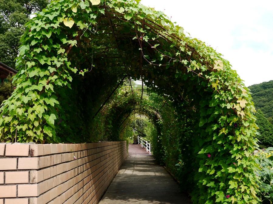 和歌山県植物公園緑花センター _b0093754_22394996.jpg