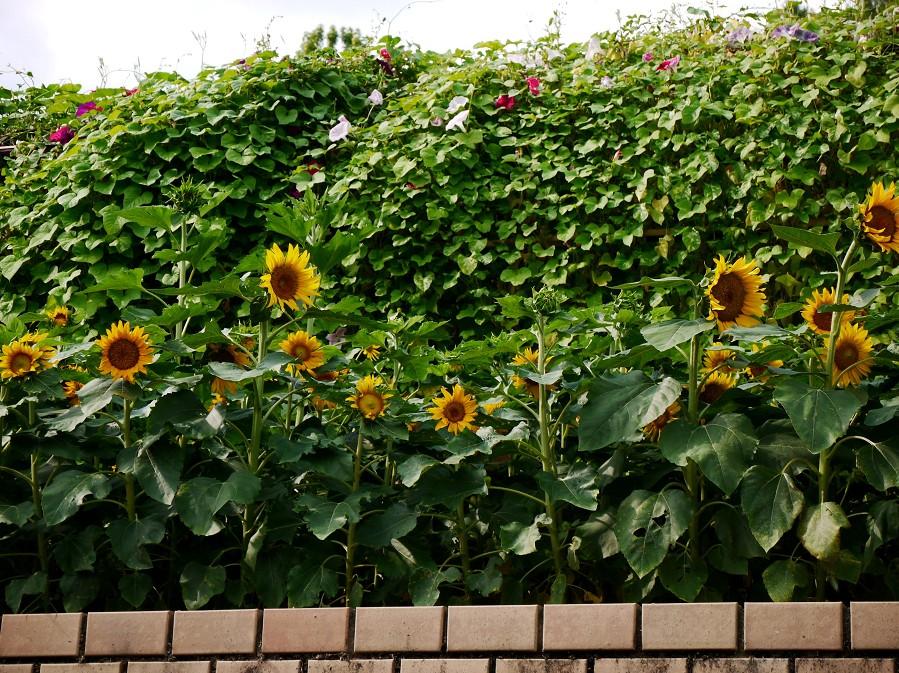 和歌山県植物公園緑花センター _b0093754_22401621.jpg