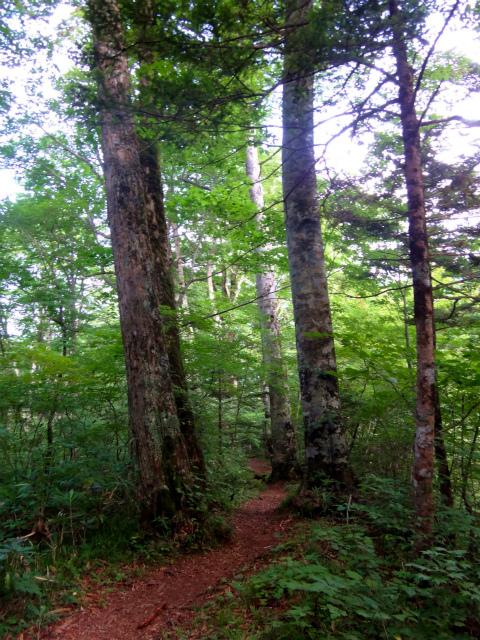 2012/08/29-30 UTMH(Ultra Trail Mount Hotaka)_b0220886_22561575.jpg