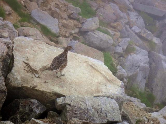 2012/08/29-30 UTMH(Ultra Trail Mount Hotaka)_b0220886_23105374.jpg