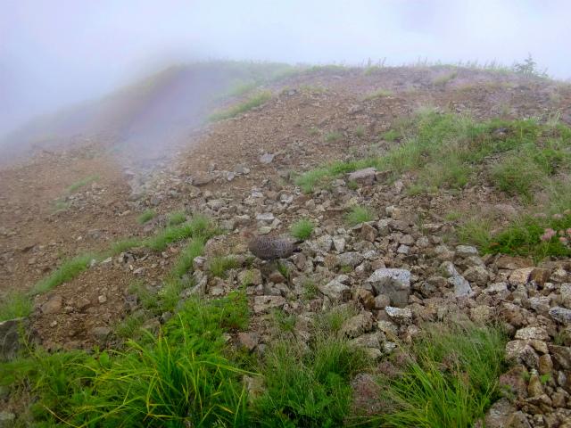 2012/08/29-30 UTMH(Ultra Trail Mount Hotaka)_b0220886_23272420.jpg