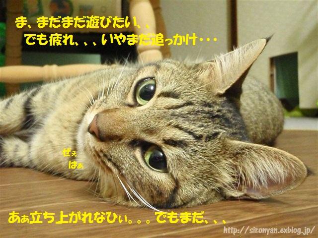 a0159490_17162183.jpg