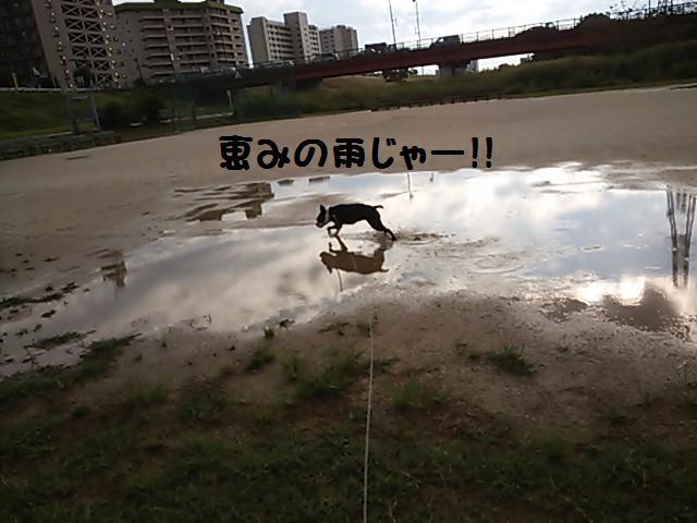 ★泥水祭り★_d0187891_20585845.jpg