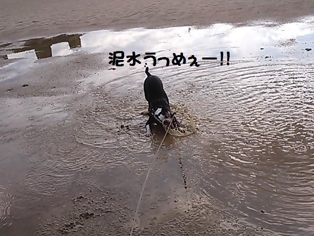 ★泥水祭り★_d0187891_20591623.jpg
