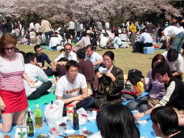 HANAMI お花見_e0170101_11552029.jpg