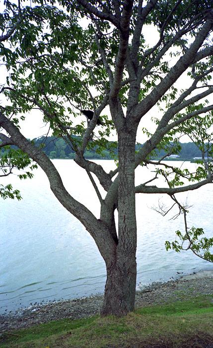 湖畔にて_d0127209_2334975.jpg