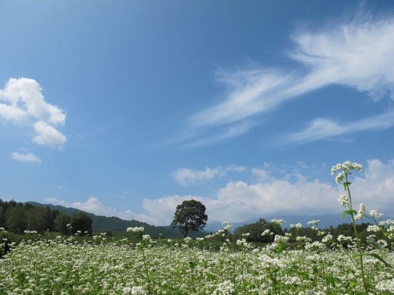 BRZで開田高原の秋を一足先に楽しむ_f0076731_19215822.jpg