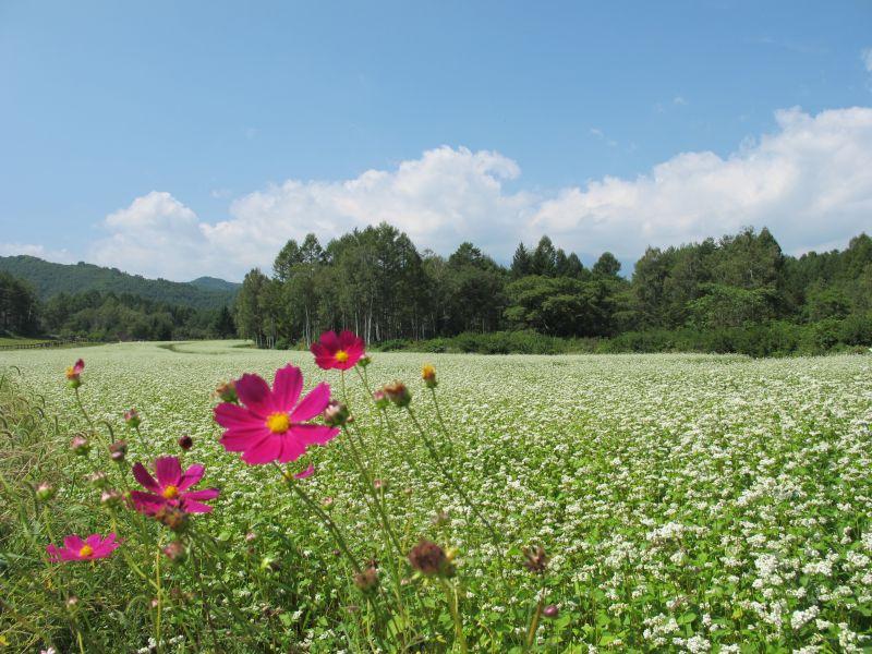BRZで開田高原の秋を一足先に楽しむ_f0076731_19235843.jpg