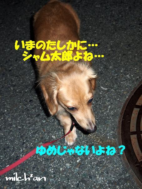 b0115642_20483326.jpg