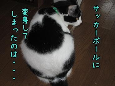 b0151748_12205731.jpg