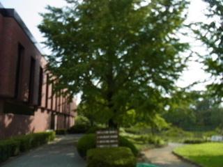 石橋美術館で、藤田嗣治とピカソとルノアールなどを鑑賞_c0011649_15593335.jpg