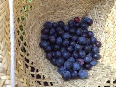 収穫と水遊び_e0244283_015943.jpg