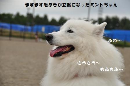f0212597_10425171.jpg