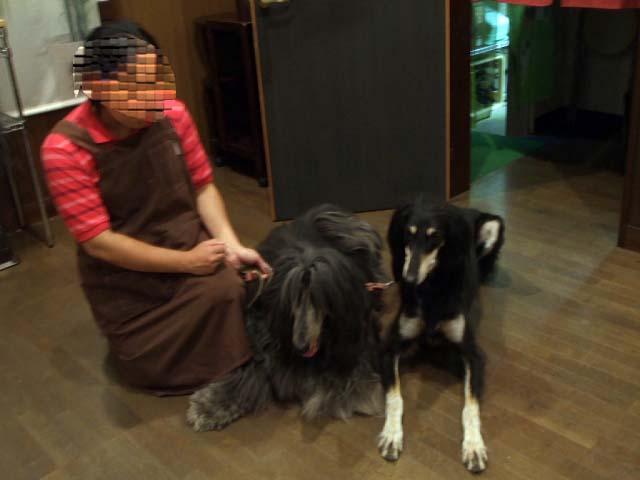 プチ旅 福島県 その3 ペンションの看板犬_f0019498_19172321.jpg