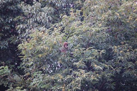 猿が出現!_a0154110_1554288.jpg
