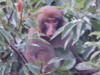猿が出現!_a0154110_15544972.jpg