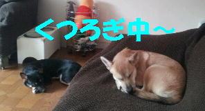 b0207320_13401987.jpg