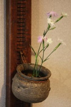 花だより_a0279848_9553218.jpg