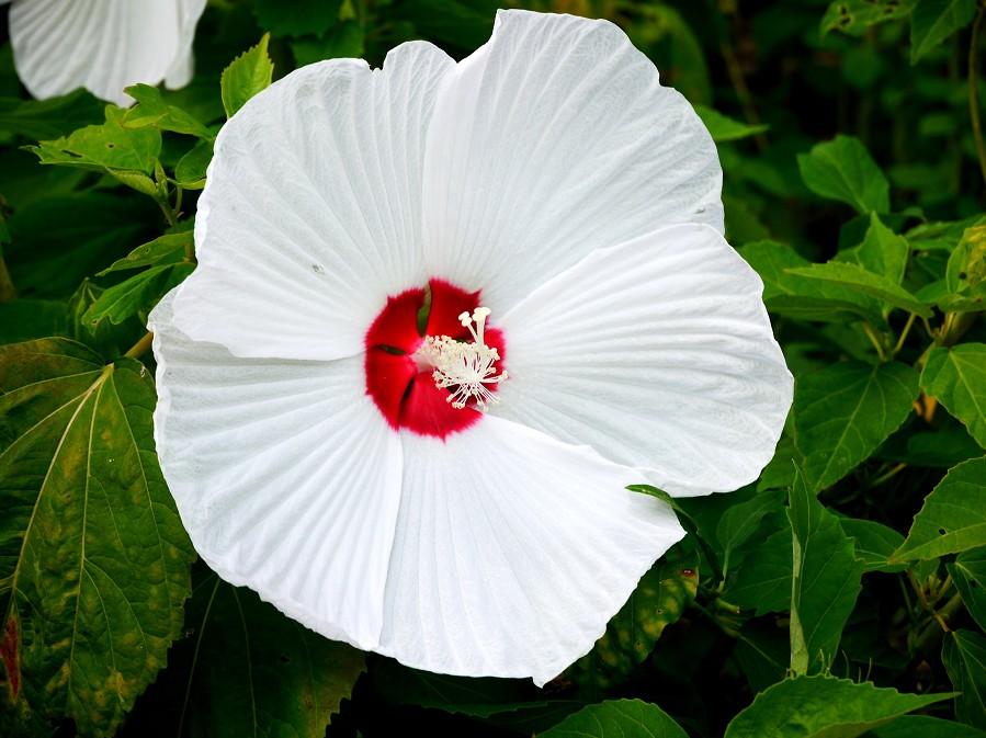 和歌山県植物公園緑花センター _b0093754_22491915.jpg