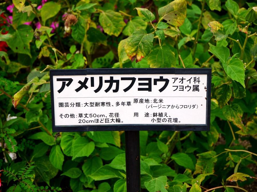 和歌山県植物公園緑花センター _b0093754_2252475.jpg