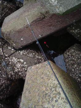やはり鳴門で根魚釣りが堅い_a0007462_1433770.jpg