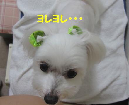 b0193480_15393435.jpg