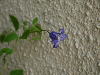 お手入れと秋の花 _a0233896_14494517.jpg