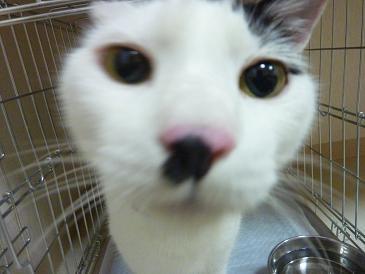猫の毛色_d0165410_19545342.jpg