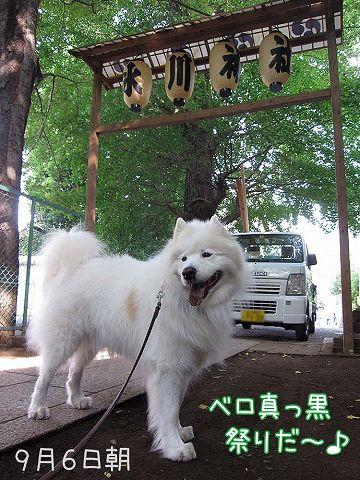 いつものお散歩_c0062832_702578.jpg